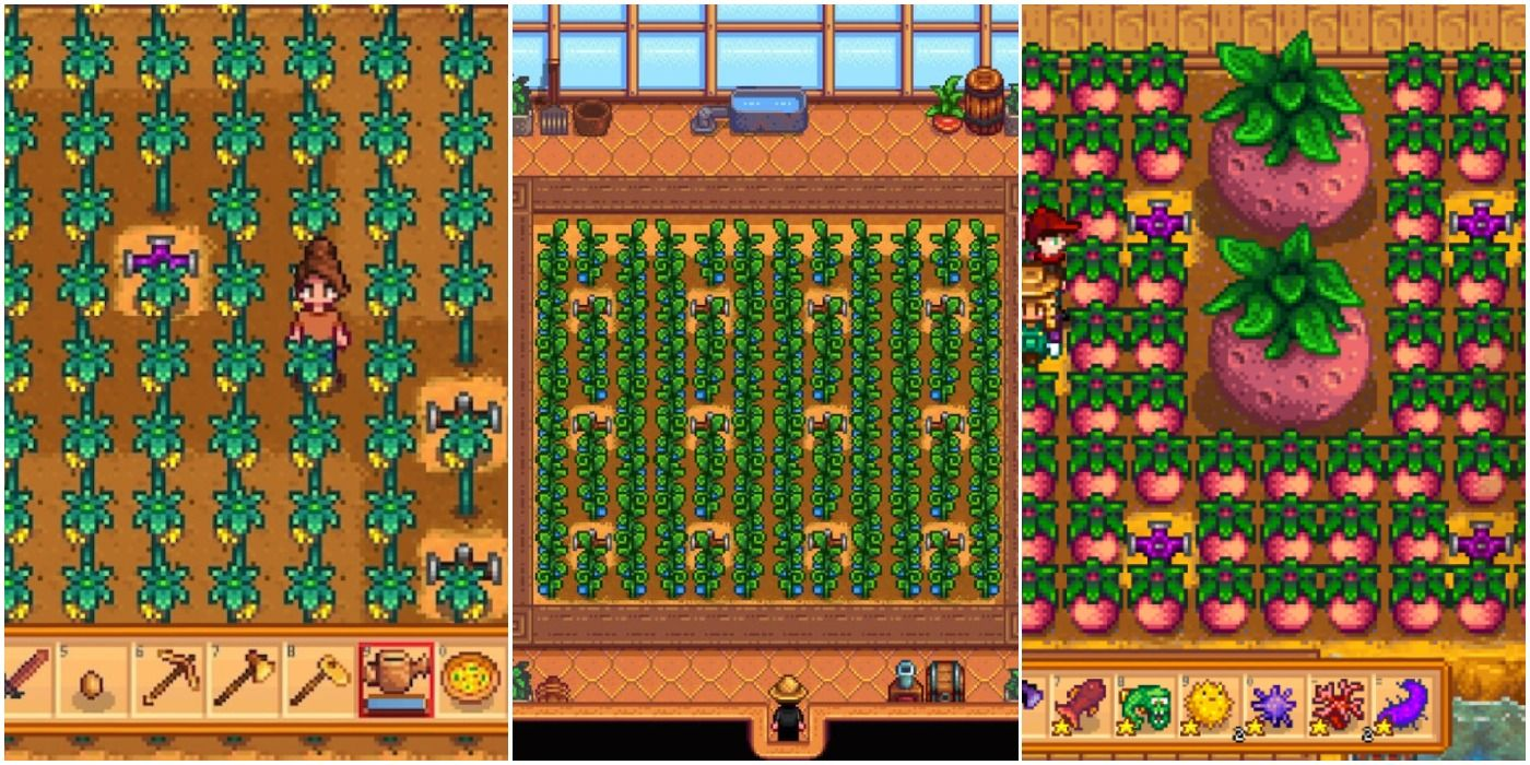 Stardew Valley 10 Best Crops To Grow In The Greenhouse